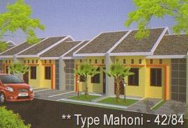 mahoni 1