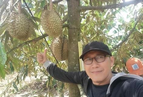 Panen Kebun Durian Cigalontang Investasi