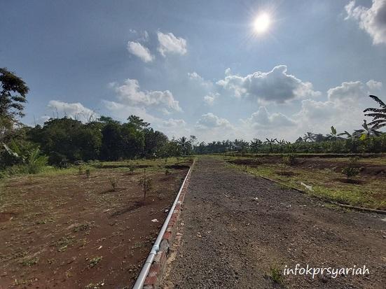 Progres Kebun Durian Cigalontang Investasi